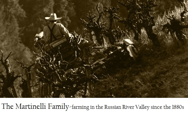 Lee Martinelli Sr. Farming Jackass Hill Vineyard